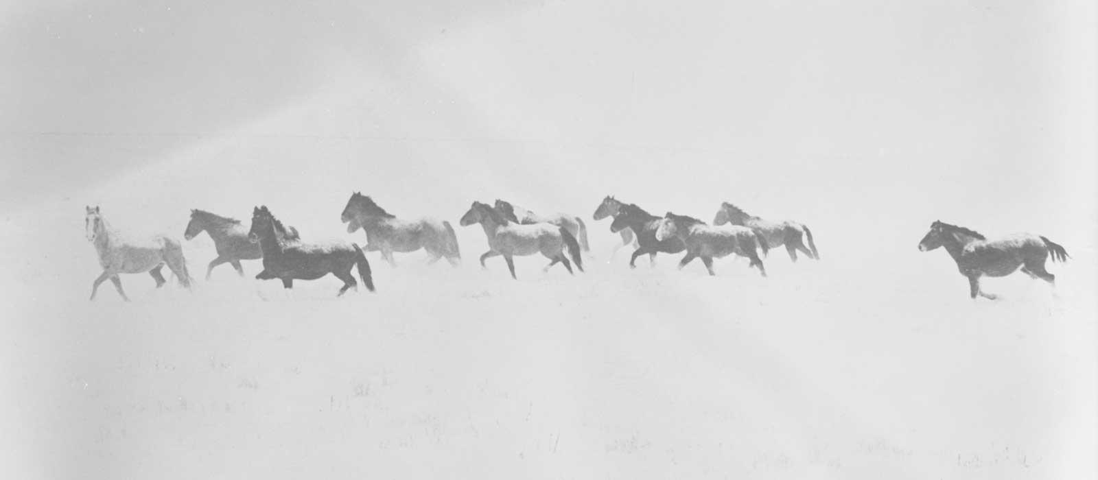 Wild Horses - Winter